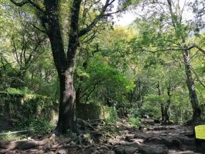 wandern in Tepotzlán